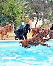 Pool-560_440.jpg