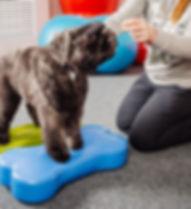 Cani adulti fanno lezione in palestra per cani al Doggy Splash di Torino