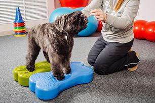 Equilibrio in palestra per cani al Doggy Splash di Torino