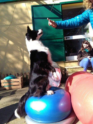 Lezione in palestra per cani al Doggy Splash di Torino