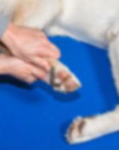 Interveto di osteopatia per cani a Torino