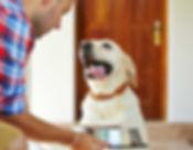 Pensione cani Danny's Pet Village Foggia