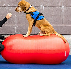 Concentrazione in palestra per cani al Doggy Splash di Torino
