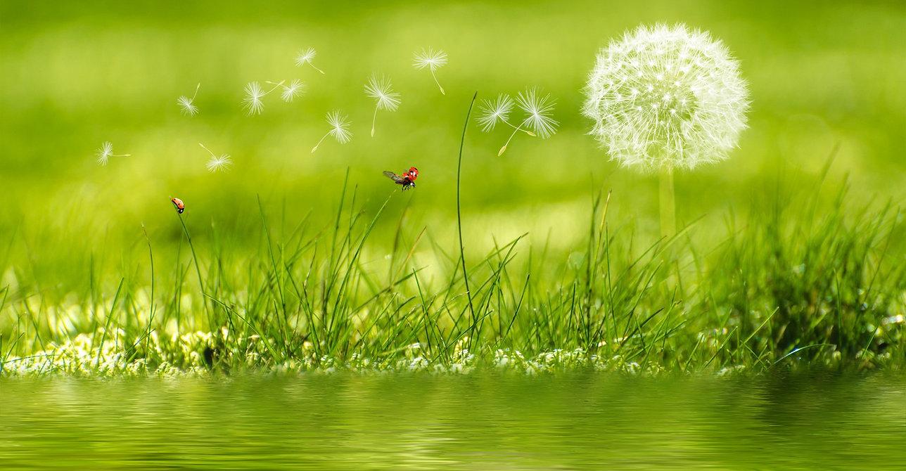 meadow-2225250.jpg