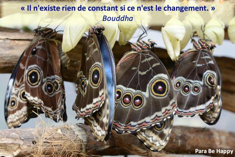 Changement.png
