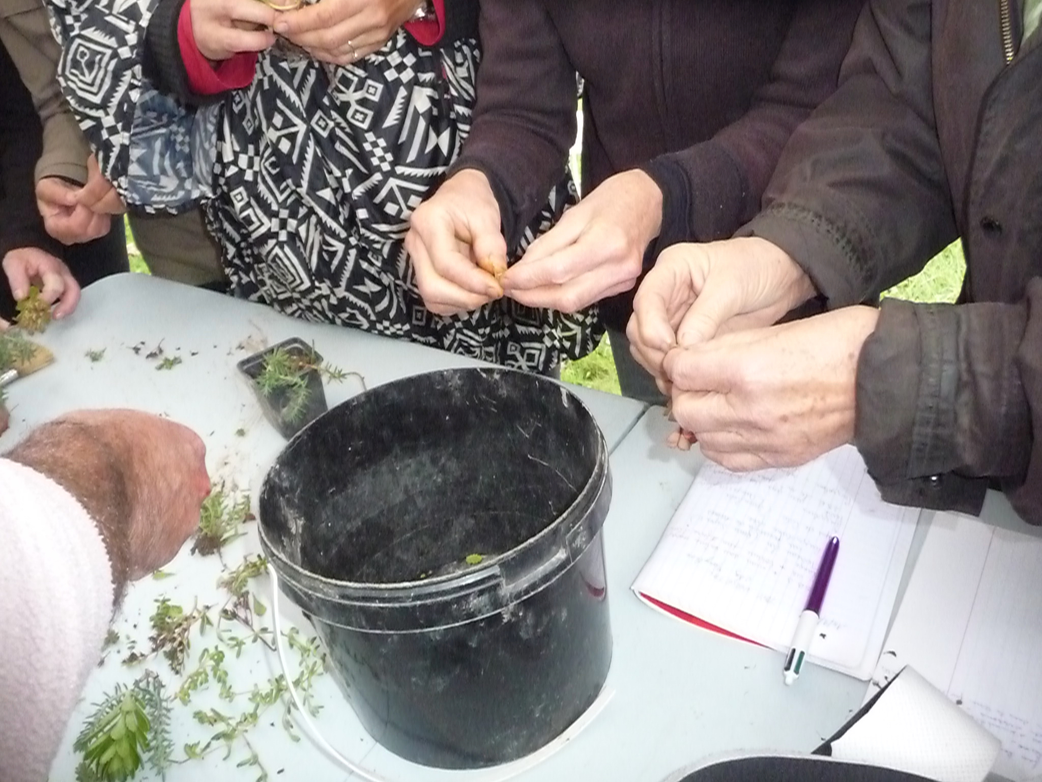 Bouture de succulente