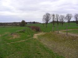 sentier Avoinerie vaches