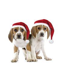 dog-beagle-puppies-wearing-christmas-hat