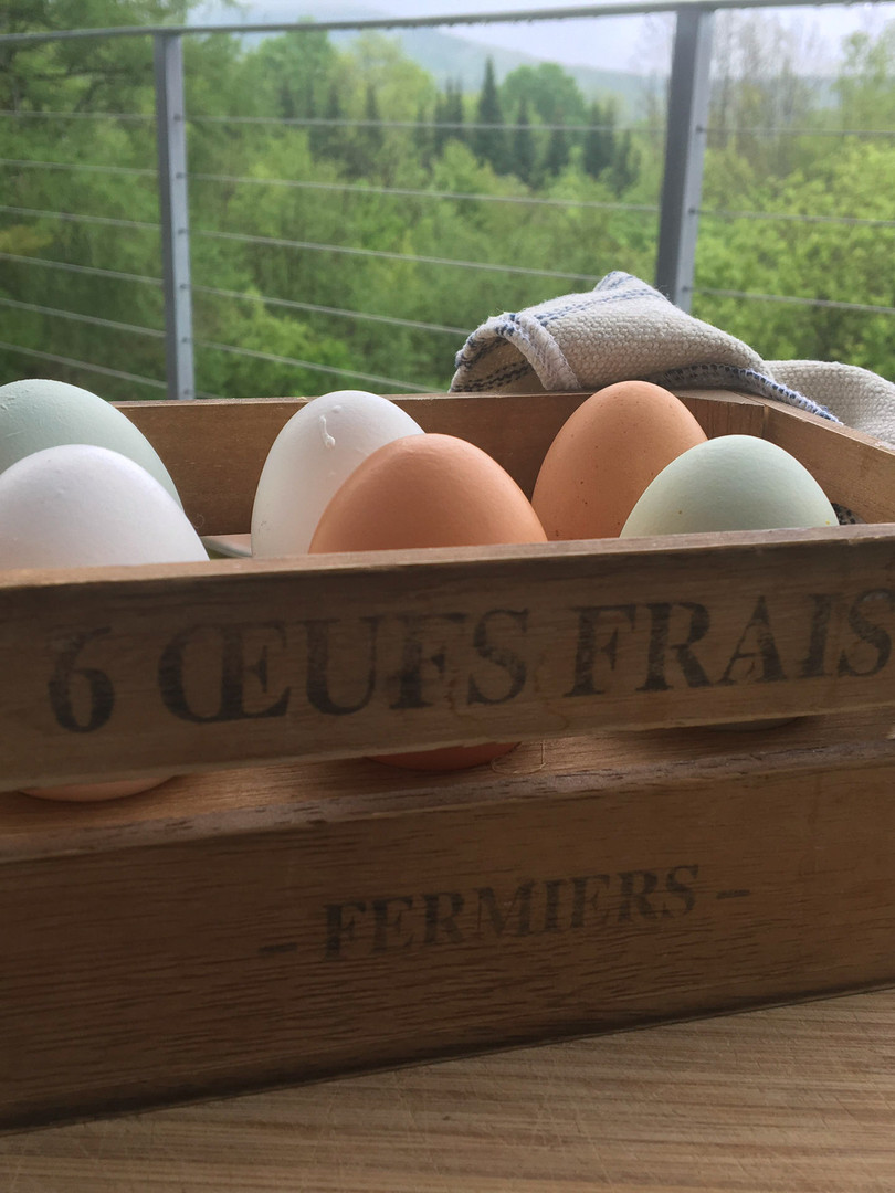 Eggs from our Hens