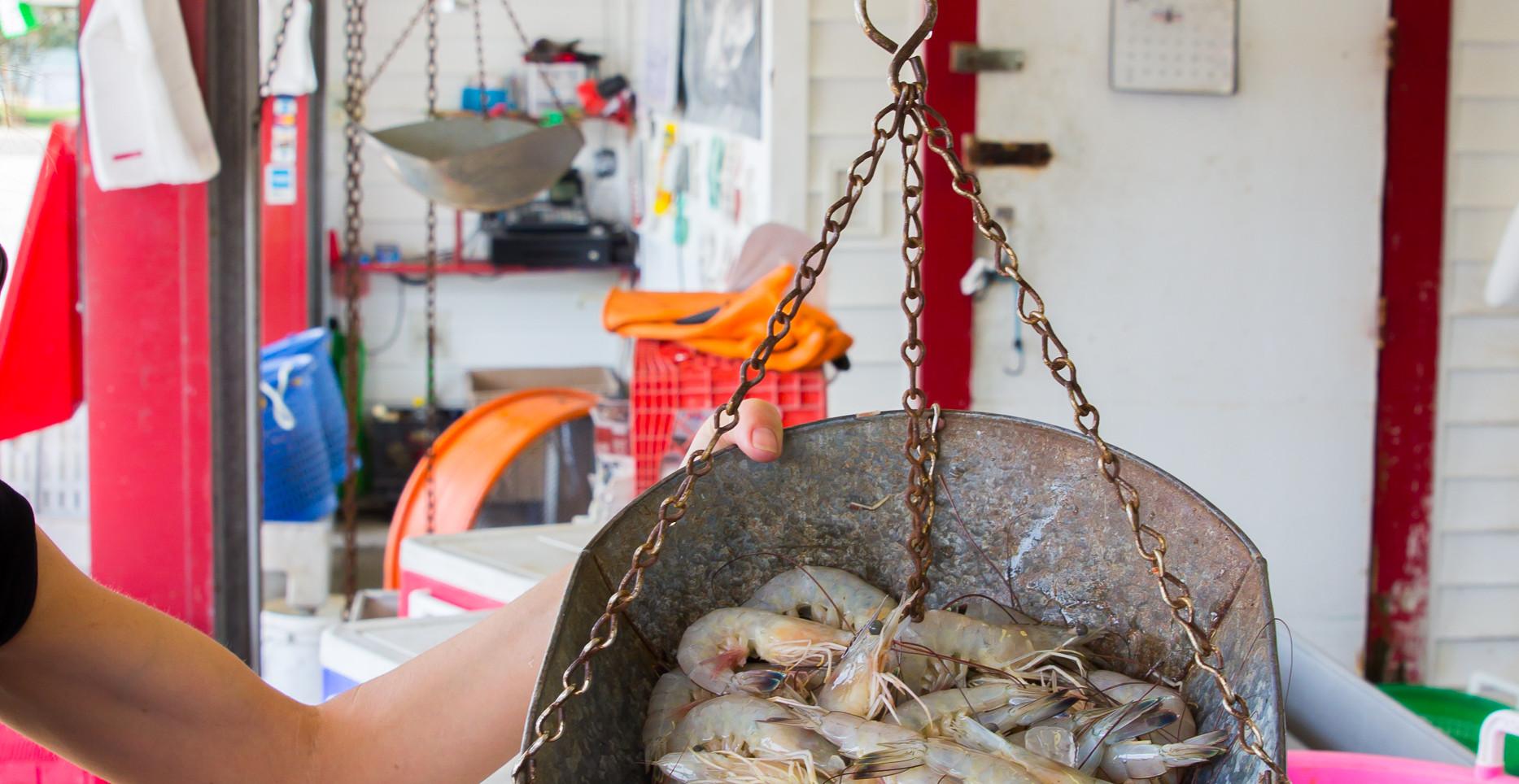 Selecting the freshest Louisiana seafood