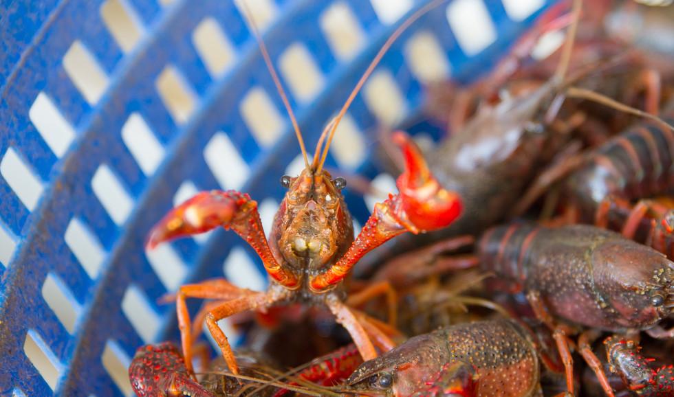 Louisiana crawfish is a treat