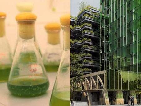 Dépolluer les villes avec les micro-algues