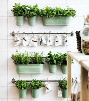 trucs et astuces de jardinage super simple et écologique !