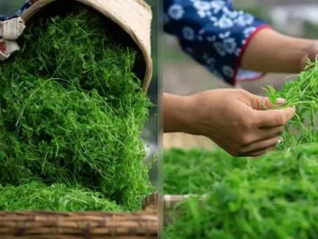 Natura Plantes®: Les vertus du Jiaogulan