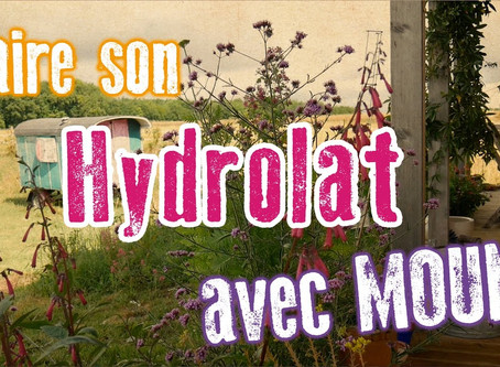 Faire son hydrolat de romarin : la recette de Moune