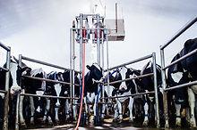 Poly-C-Farms_106.jpg