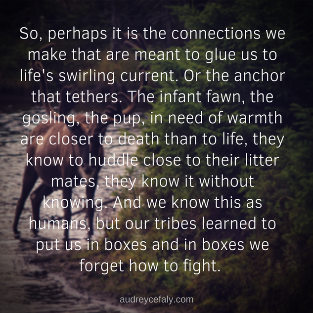 Audrey Cefaly: So perhaps it is the connections wee make that are meant to glue us to life's swirling current...