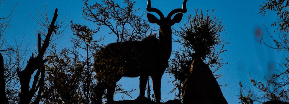 Kudu silhoette