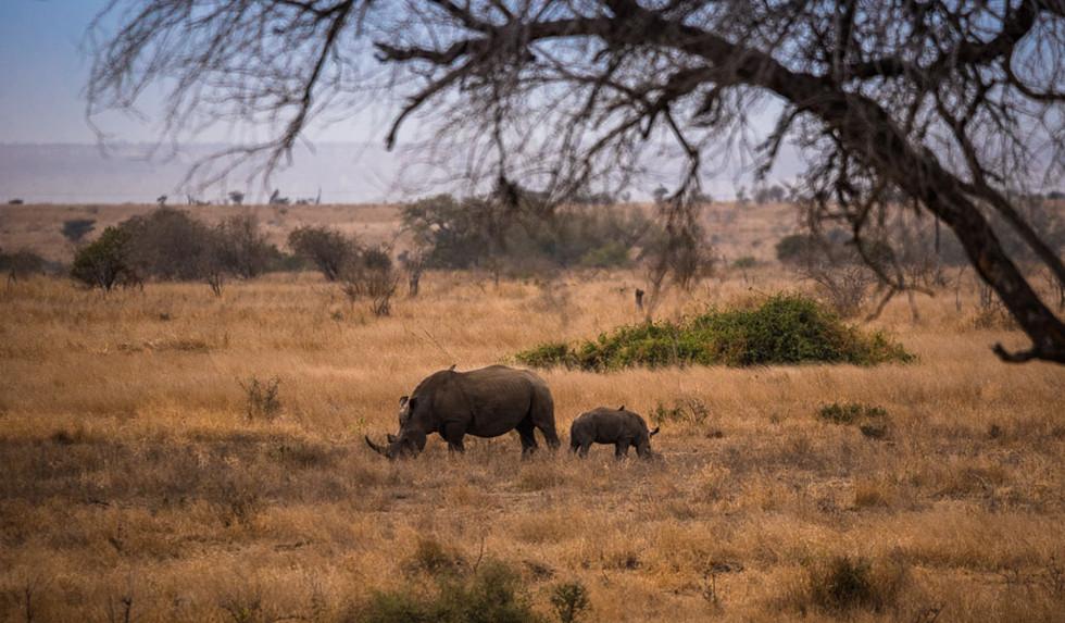 Rhino mom with baby
