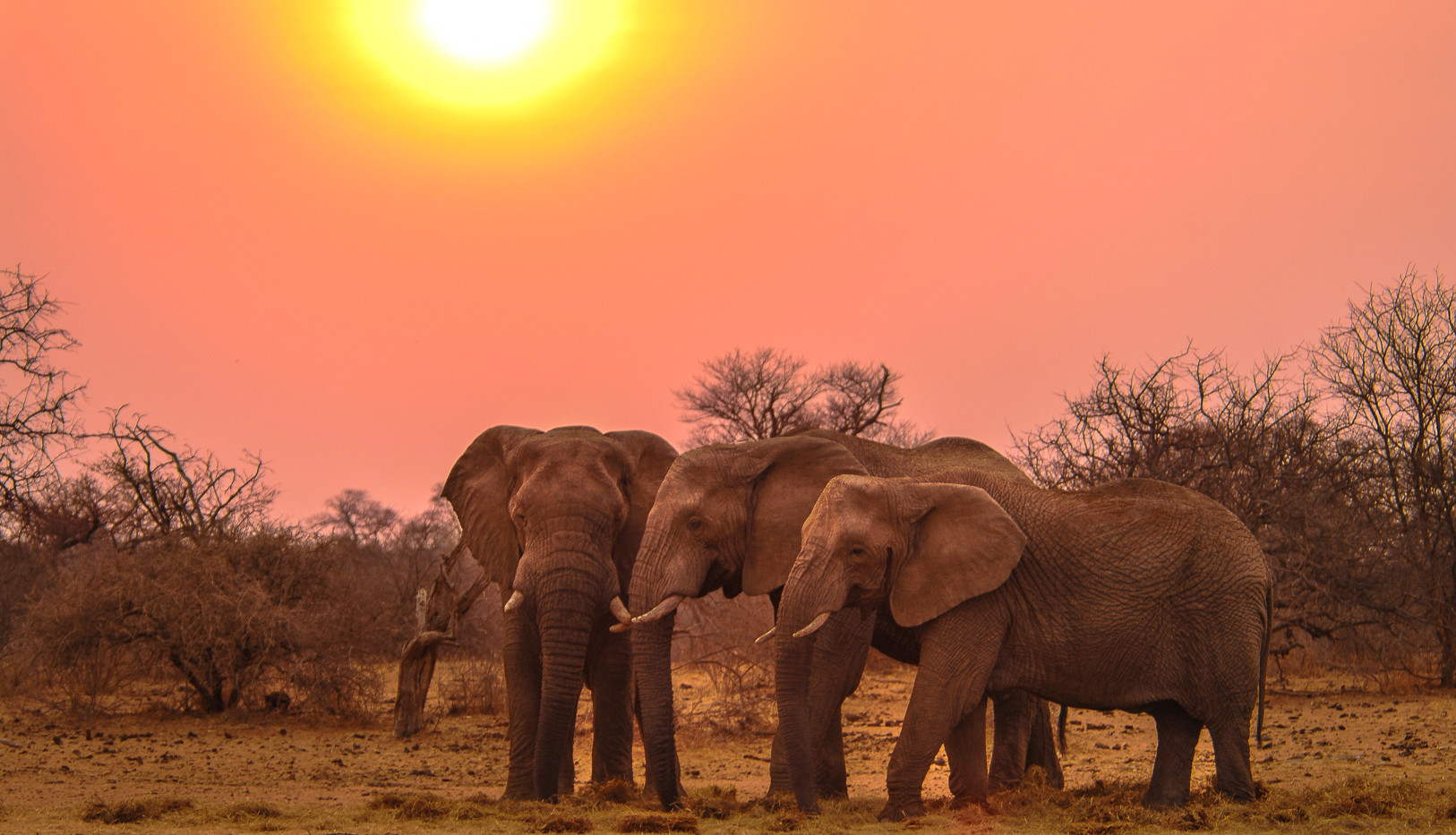 Elephant trio at sunset