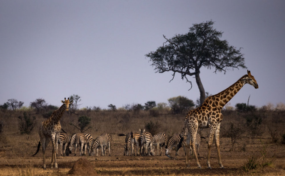General wildlife