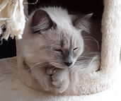 cat tree cubby 20181116_085014 cr.jpg