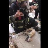 Bomberos reaniman perro salvado en incendio