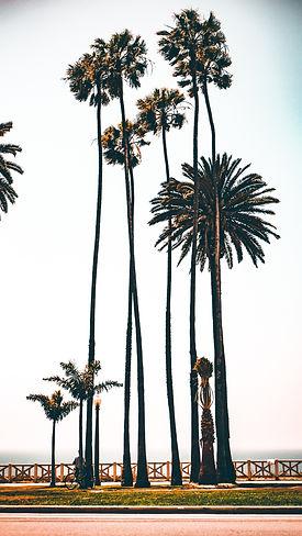 los-angeles-palms-by-boardwalk.jpg