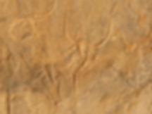 arte rupestre algeria del sud