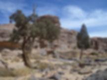 Tassili n'Ajjer arte preistorica algeria cipressi fossili