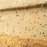 woodworm survey,HLS Northwest,Morecambe,Lancaster,Cumbria,Lancashire