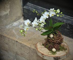 Thierry Stenzel, à nos amours, avignon, fleuriste, plantes