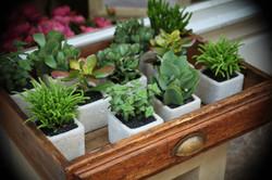 plantesgraasses-lhollebecq