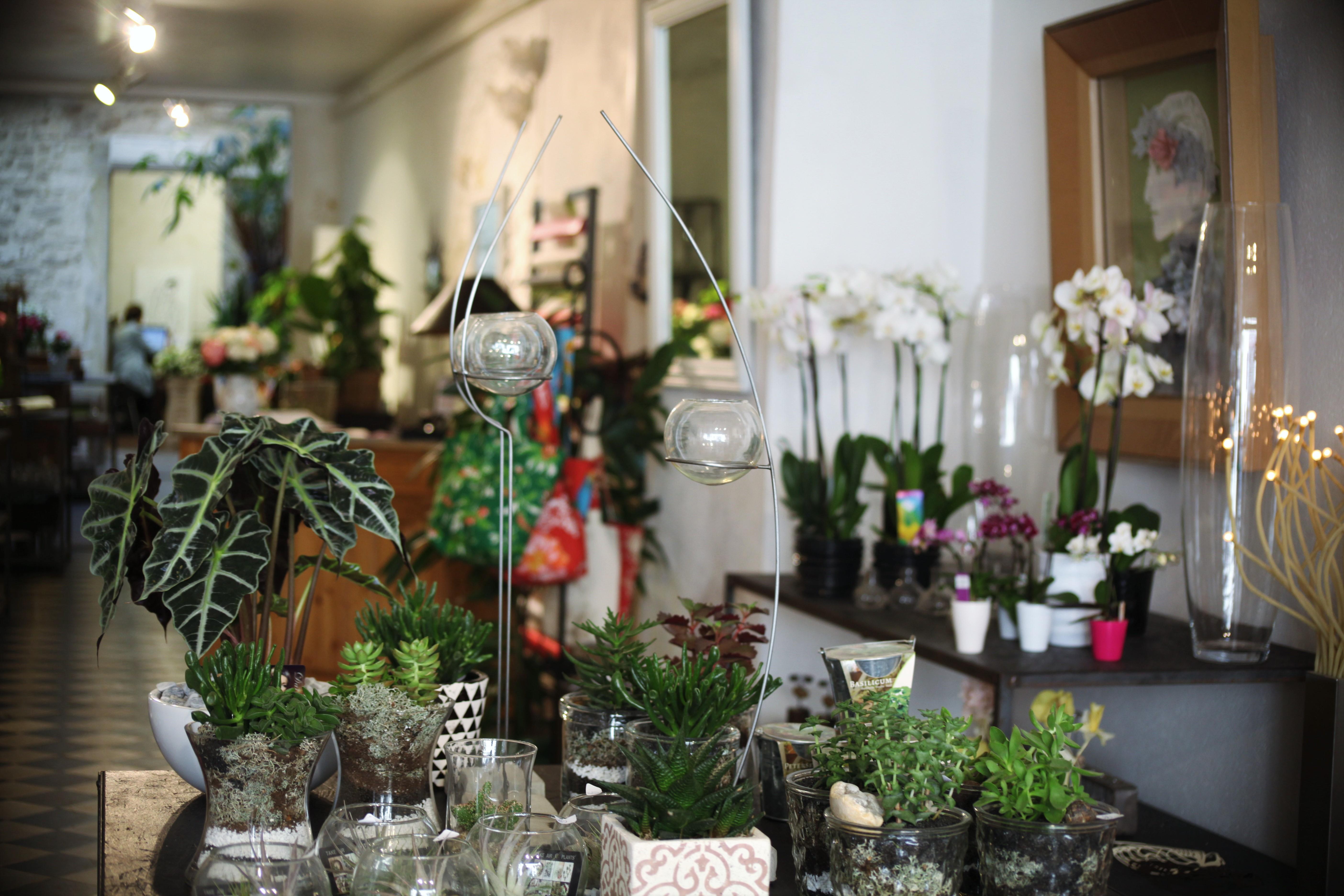 boutique-interieur-lhollebecq