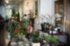 Boutique, fleuriste, à nos amours-design végétal, 15 rue des 3 faucon, Avignon, plantes, fleurs, déco, art floral, thierry stenzel