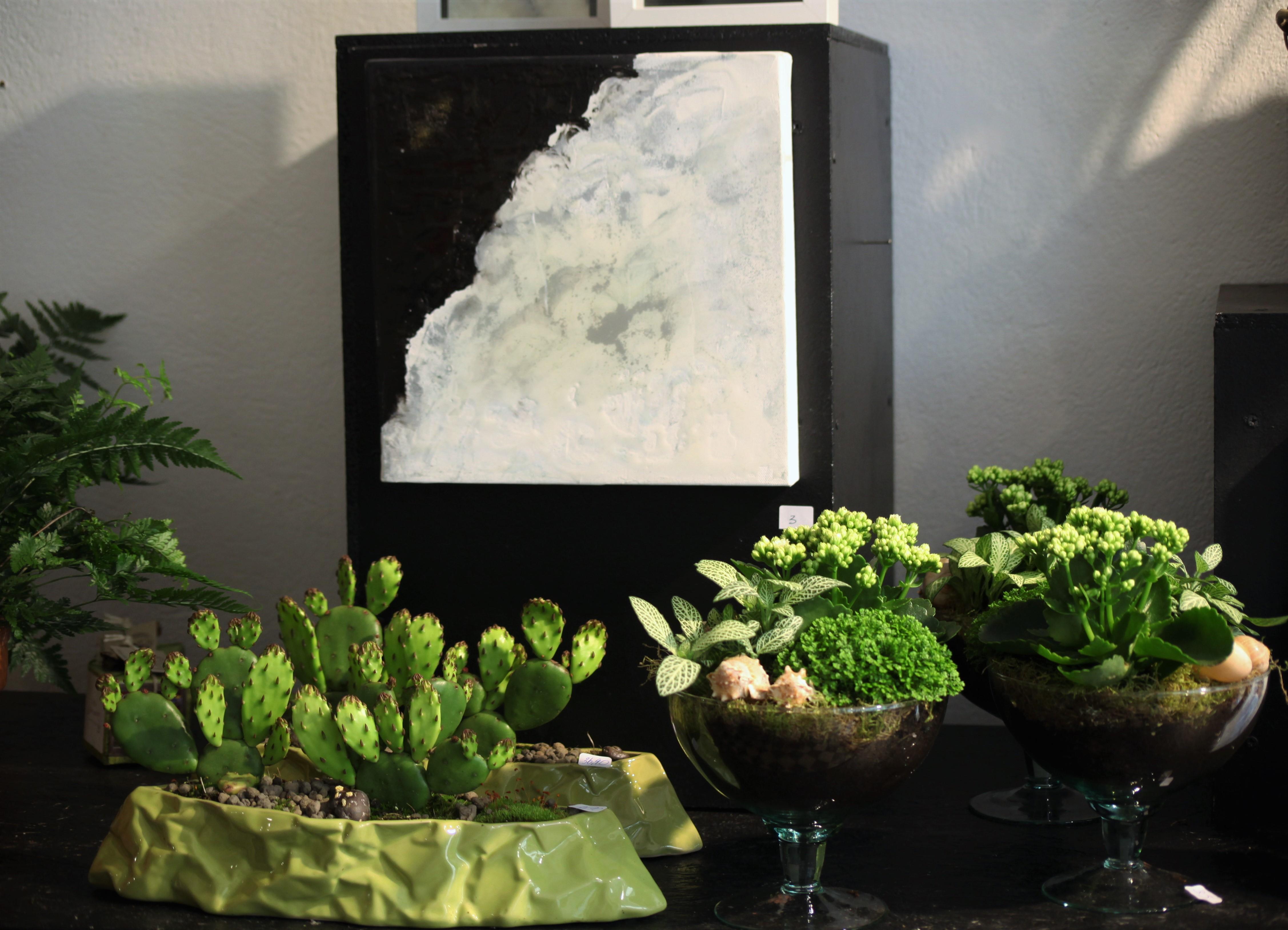plantes-déco-lhollebecq