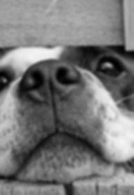 dog-cute-pet.jpg
