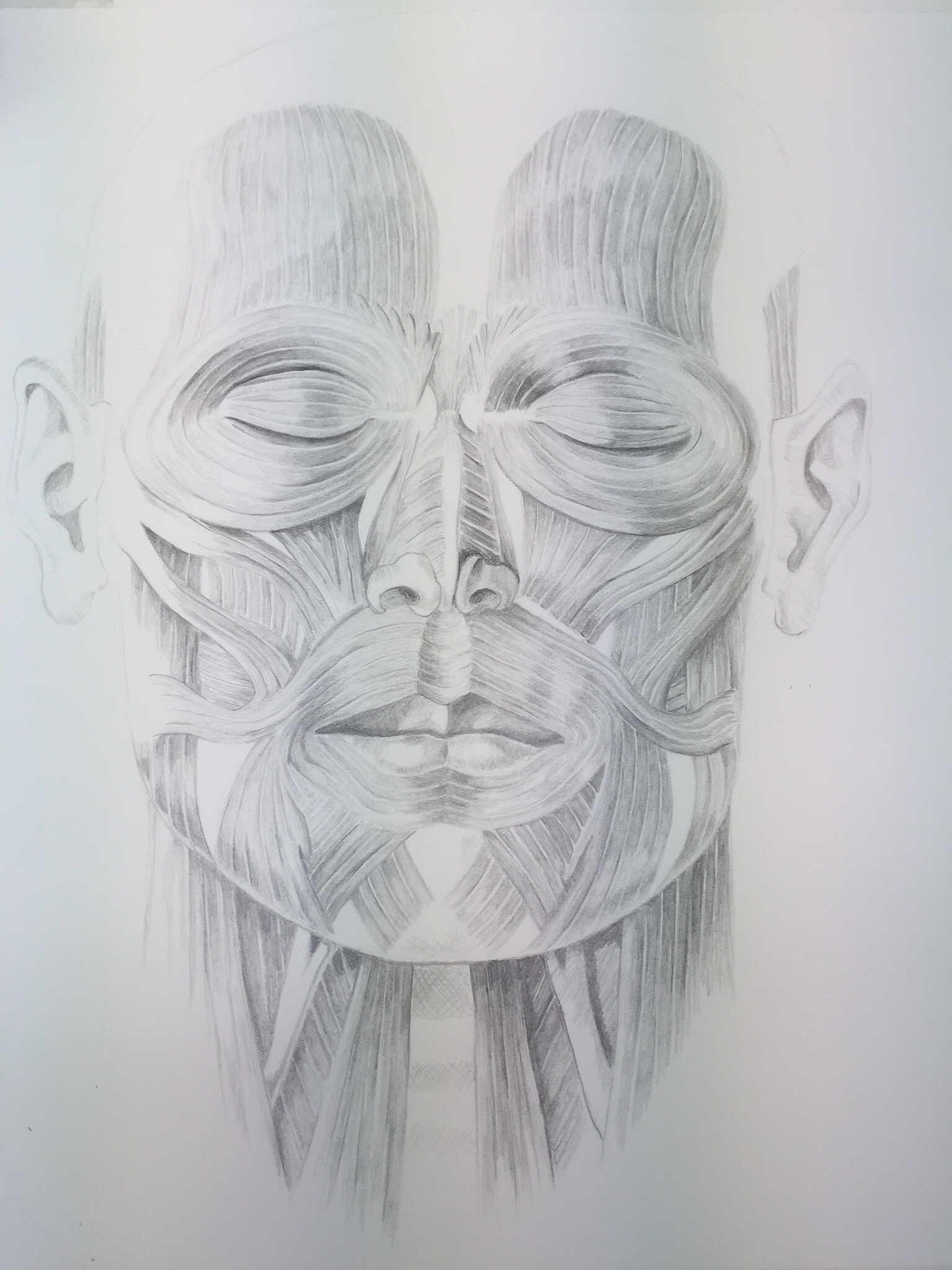 studie spieren hoofd, 2015