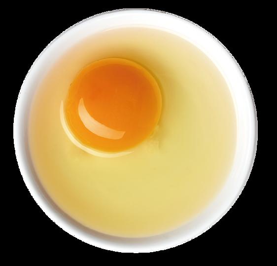 yolk02.png