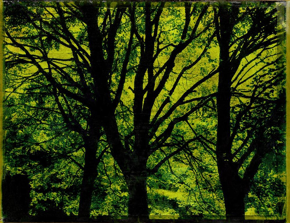 02-arbre.jpg