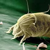 traitement-des-parasites.jpg