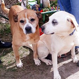 Elli und Nelli
