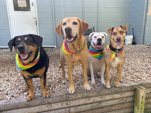 Pride bandanas for nonprofits