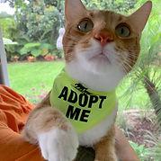Hygge Adopt Me2.jpg