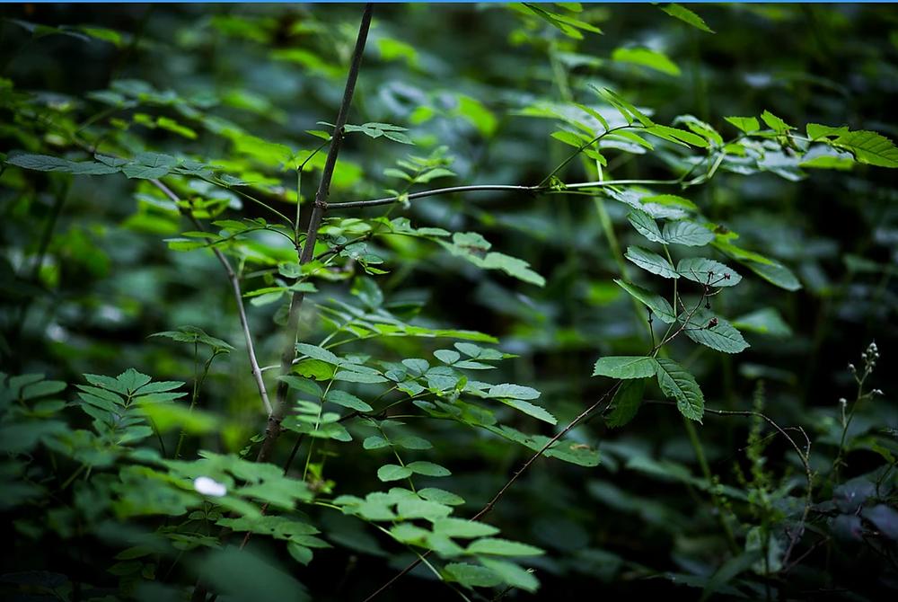 Green ©Loredana Denicola