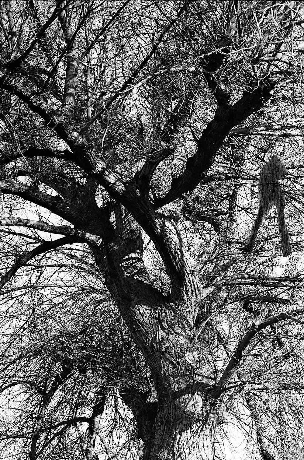 I had a dream and I talked with a tree .... photography project by Loredana Denicola