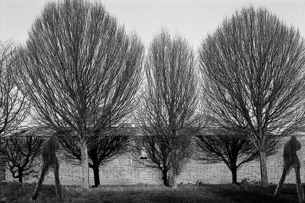 I_HAD_A_DREAM_AND_I_TALKED_WITH_A_TREE.jpg