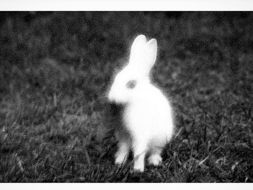 The Magic Rabbit and the nonsense...