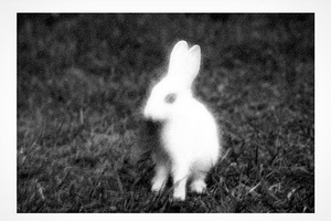The rabbit in the countryside, © Loredana Denicola