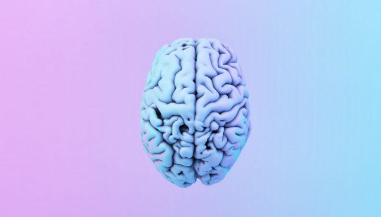 cerebro-colorido_72104-1729.jpg